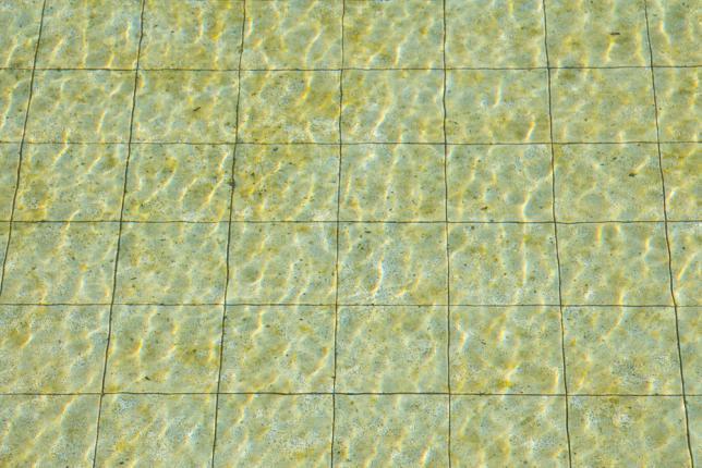 algues jaunes piscine