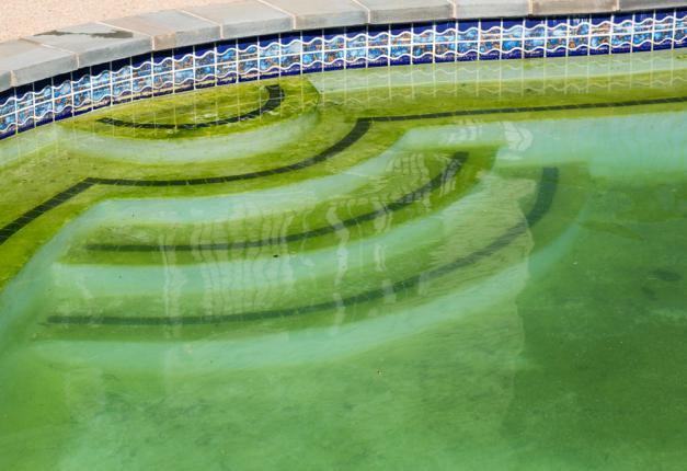 algues vertes piscine