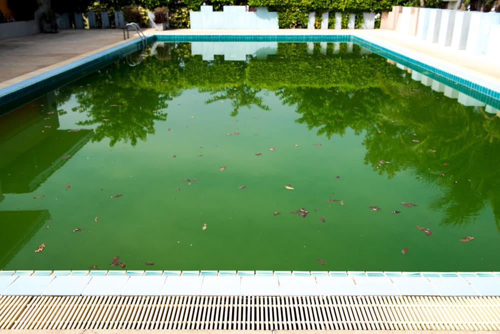 Présence d'algue dans une piscine