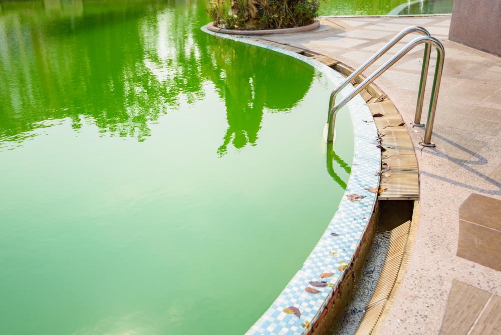 Prolifération d'algue dans une piscine