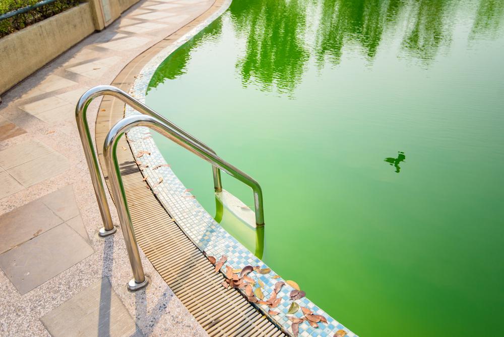 Présence d'algues dans une piscine