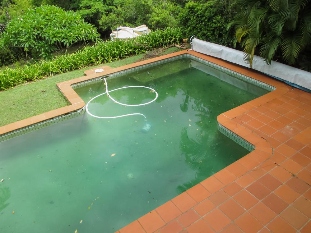 traitement des algues d'une piscine