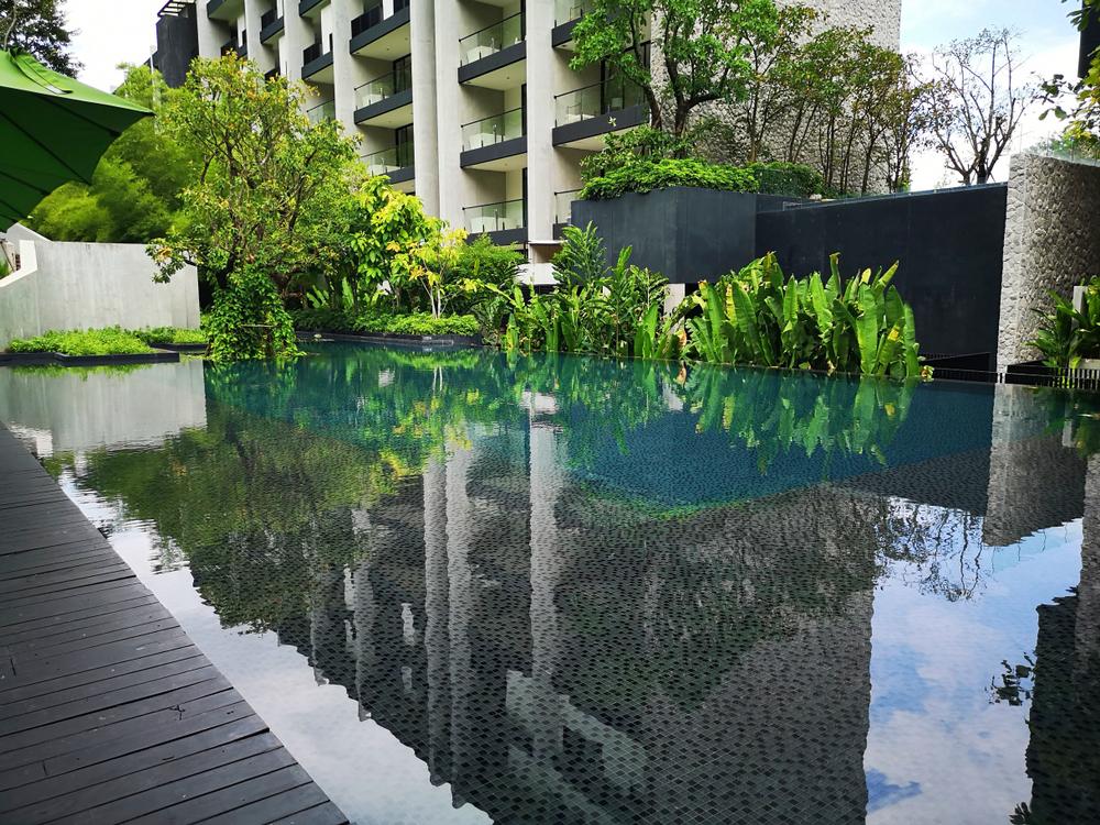 Traitement piscine naturelle