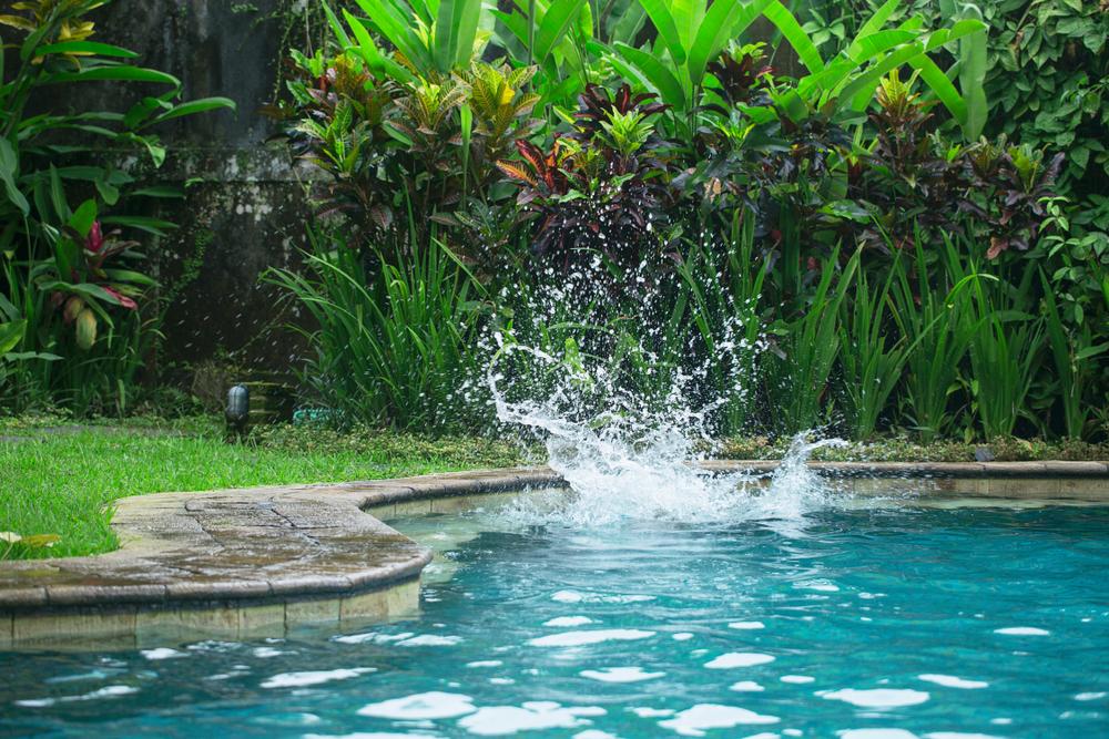 zone de lagunage d'une piscine naturelle